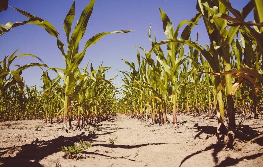 ¿Qué tiene que ver el veganismo con el cambio climático?